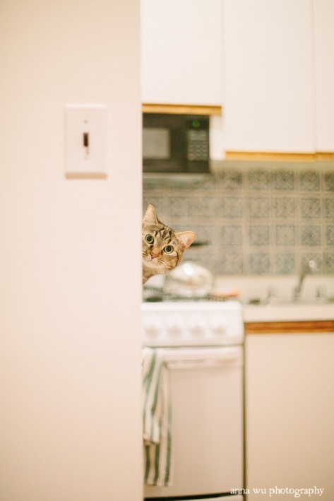 Peekaboo cat | New York City Winter Holidays | Anna Wu Travel Photography