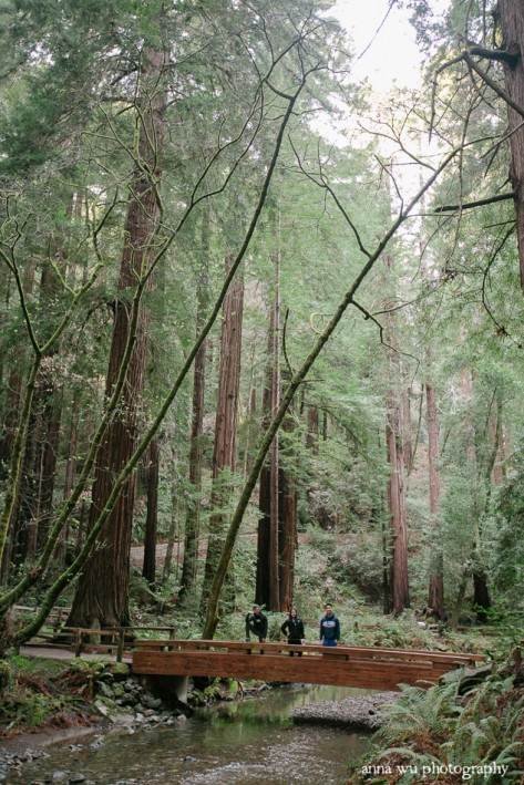 Muir Woods on Presidents Day | Anna Wu Photography San Francisco