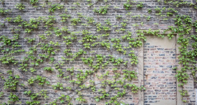 Collect All The Ivy | Chicago Travel Photography