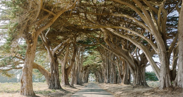Point Reyes Tree Tunnel & Panoramic Hill