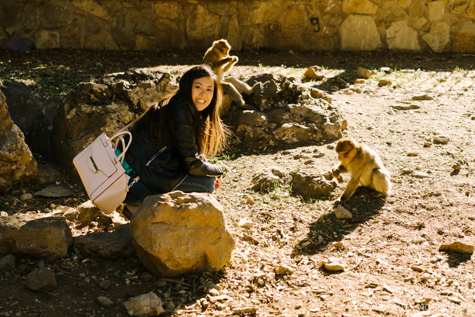 Monkeys in Morocco | Travelogues by Anna Wu