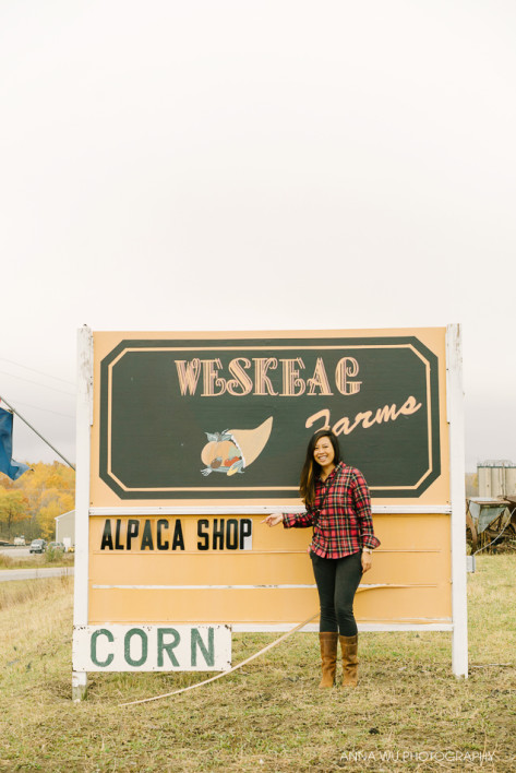 Weskeag Alpaca Farm, Maine | Anna Wu Travelogues