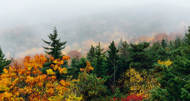 Acadia National Park | Maine