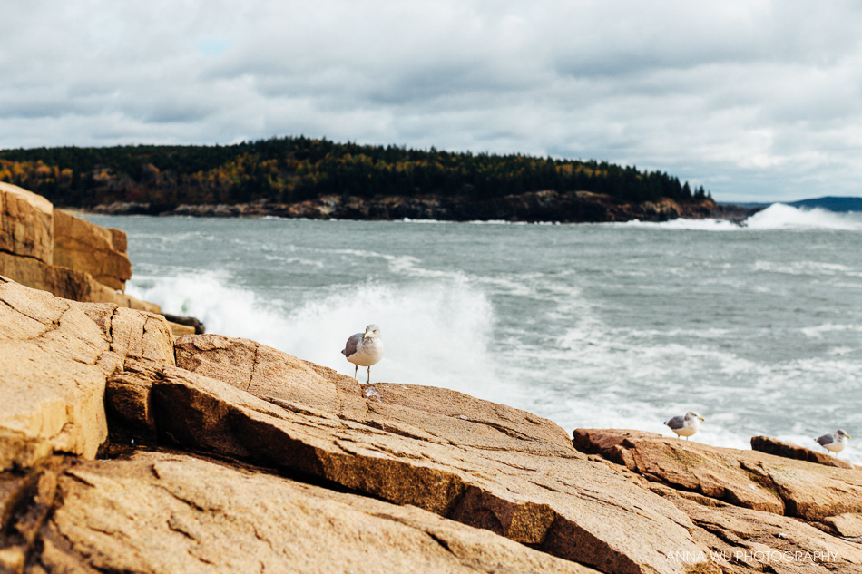 Acadia National Park, Maine | Autumn Foliage Road Trip